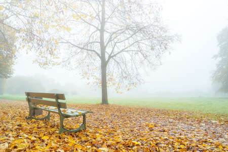 bench in a autumn park: early morning scene