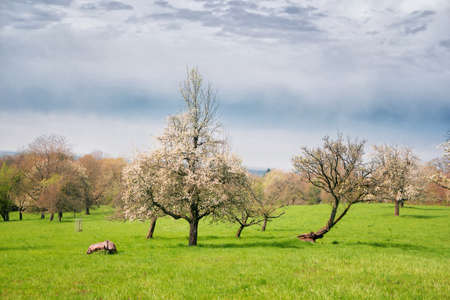 Vincennial landscape with flowering trees Stockfoto