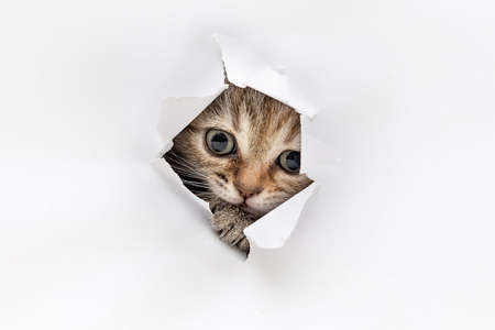 Kitten look through a hole in the paper