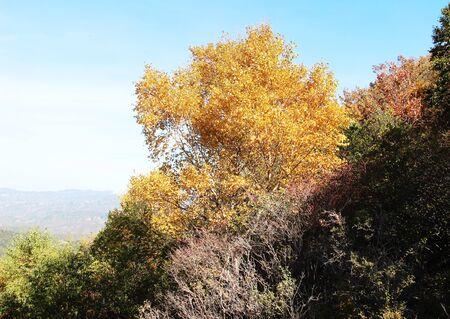 gold tree: Gold tree