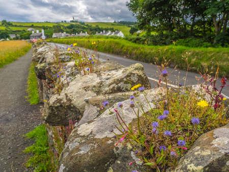 BALLIMENA UK- JULY 12, 2016 - CUSHENDUN VILLAGE, Flowers on the dry-stone wall - Northern Irland on July 12, 2016 Editorial