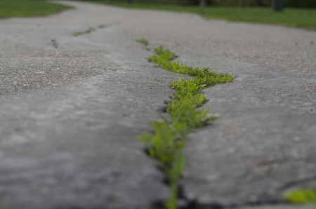 a paved walking trail with a close up of the pavement and grass growing through the cracks and the trail blurred in the distance photo
