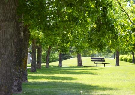 Eine Reihe von Bäumen auf der rechten Seite mit grünen Blättern auf dem Oberteil und einer Parkbank in der Ferne. die Sonne durch die Blätter glänzend Standard-Bild - 20462170