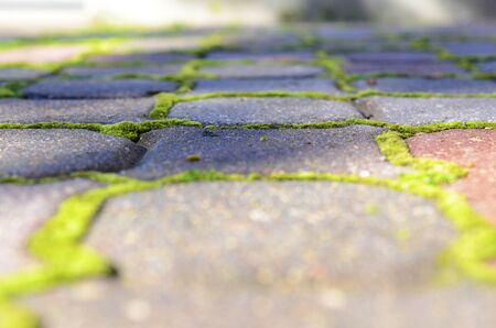 crevasse: Paving stones with moss growing in the crevasse  Stock Photo