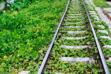 twiggy: Green plants growing by the railroad tracks