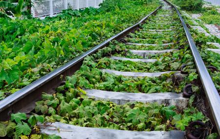 railroad tracks: Green plants growing by the railroad tracks