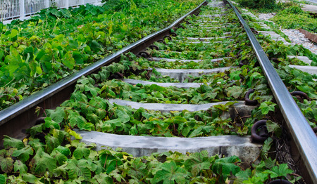 straw twig: Green plants growing by the railroad tracks
