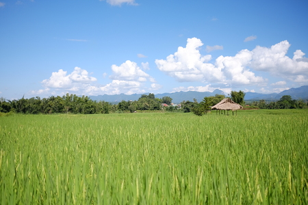Green Terraced Rice Field in Chiang Mai, Thailand