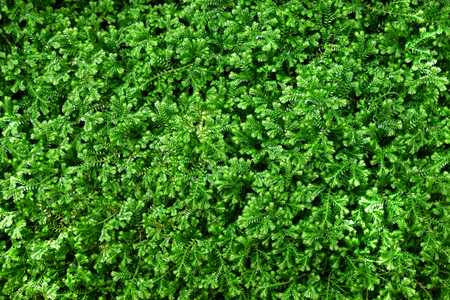 Natural green little plant background.