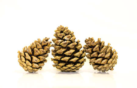 Three fir cones on a white background photo