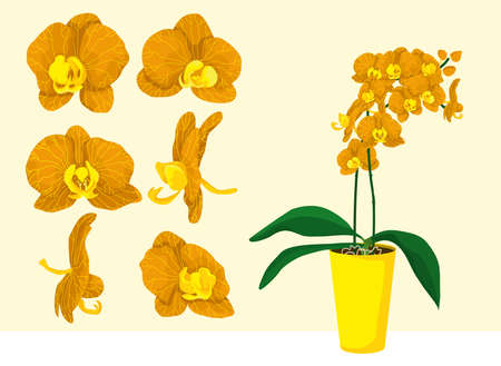 Orange and yellow orchid plant in pot. Interior design element. Set of different single flowers. Colorful petals. Isolated vectors. Illustration