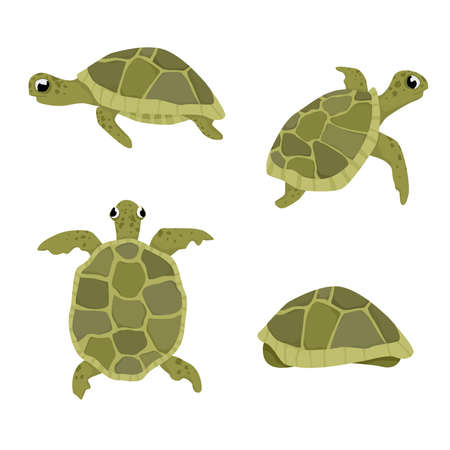 Sea turtle vector illustration set isolated on white background turtles in different positions views