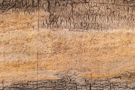 peat bog earth cross section texture