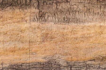 turf: veengebied aarde doorsnede textuur Stockfoto