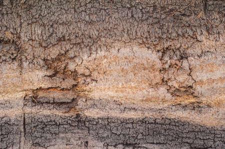 turf: veengebied aarde achtergrond textuur Stockfoto