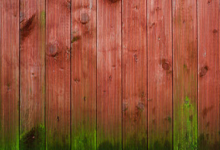 panelling: moss growing on wood panelling background Stock Photo