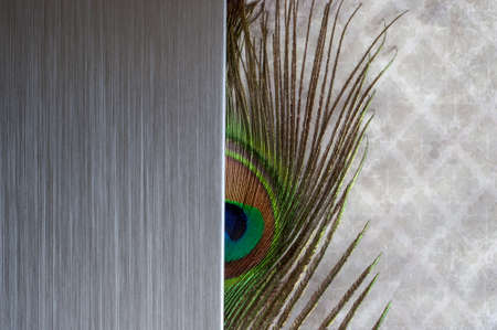 Brushed metal peacock feather abstract background photo