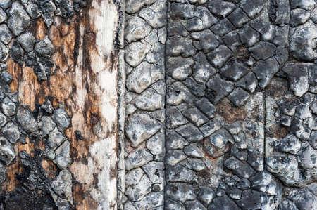 stratification: closeup burnt wood texture