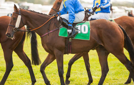 caballo corriendo: jinetes prepara para entrar en la puerta de inicio