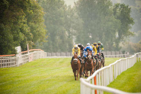 horse race: horse race coming down the track