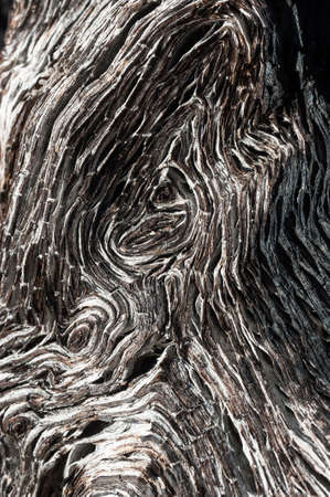 turf bog: close up of ancient bog-wood texture