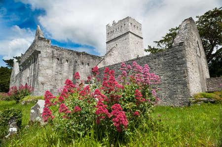 Muckross Abbey in county kerry Ireland