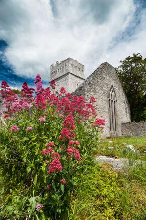 gaelic: Wild flowers in front of Muckross Abbey in county kerry Ireland