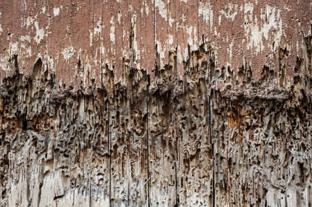 rotting: rotting wood door background