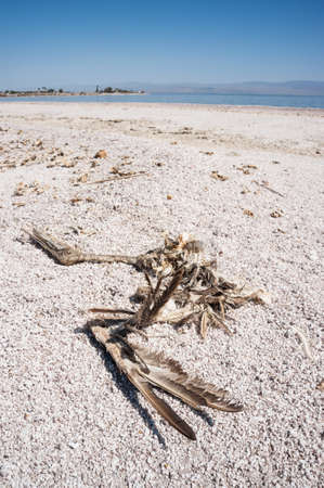 karkas: dode vogel Karkas door de Salton zee in het zuiden van Californië