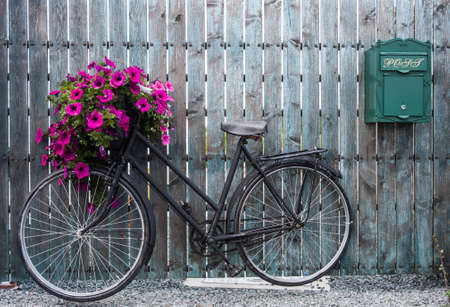 포도 수확: 꽃 바구니와 함께 오래 된 빈티지 자전거 스톡 콘텐츠