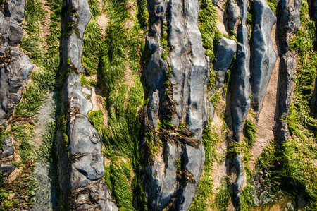 sea grass: close-up of Sea Grass on rocks at low tide