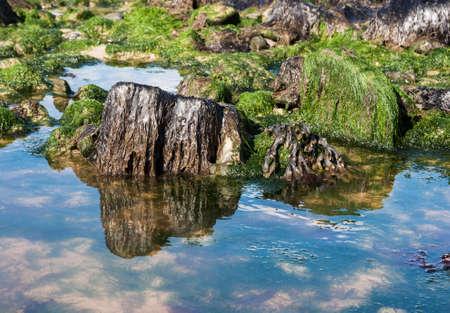 sea grass: Vibrant Sea Grass at low tide sky reflection Stock Photo