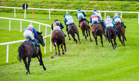racehorses: racehorses turning the race track