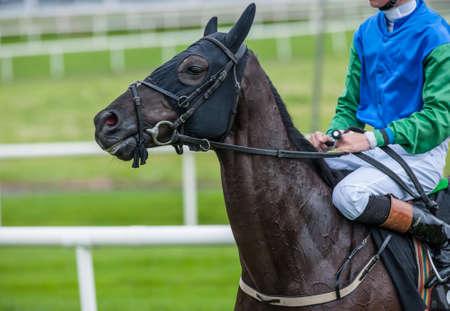 cavallo in corsa: stretta di cavallo da corsa e fantino in pista