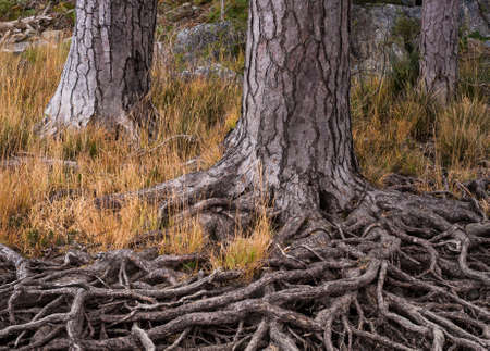 erosion: Exposed tree roots from erosion