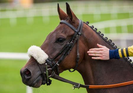 horse race: jockey petting race horse before race