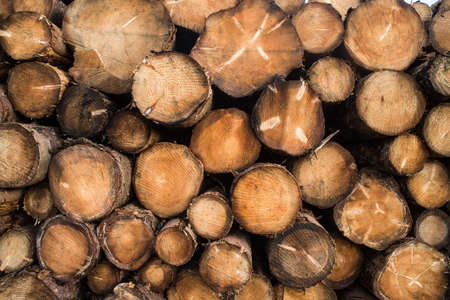 pile of logs: Pile of chopped wood logs background texture Stock Photo