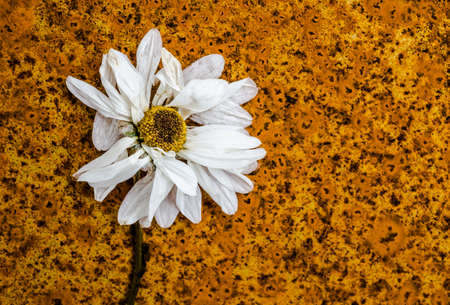 decaying: abstract decaying flower on rusty background texture Stock Photo