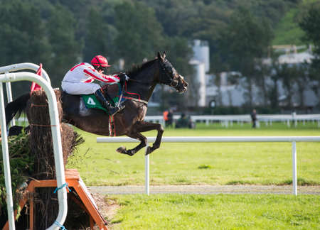 steeplechase: Race horse and jockey jumping a hedge during a steeplechase race Stock Photo