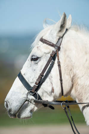 Side profile portrait of a Horse outdoors Stock Photo