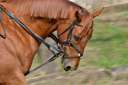 rein: Seance dressage Stock Photo