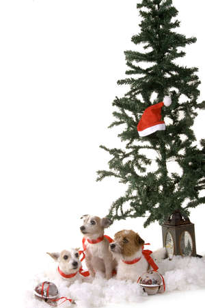 Three dogs sitting by the christmas tree Stock Photo
