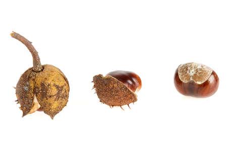the three stadium of the chestnut photo