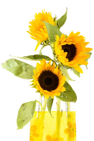 a closeup of sunflowers in a vase Stock Photo