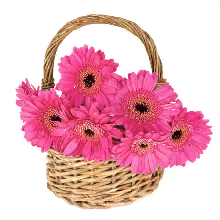a basket, full with pink daisies photo