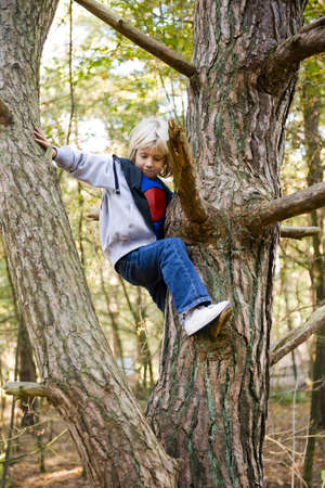 portrait of a happy child, climbing in a tree in a wood Stock Photo