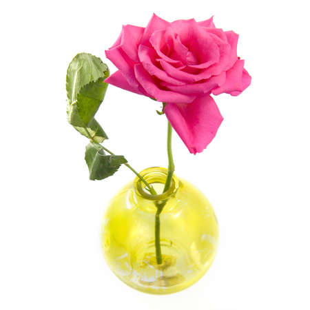 A beautiful rose in a yellow vase on a white background Stock Photo - 8324527