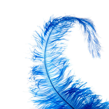 a blue feather