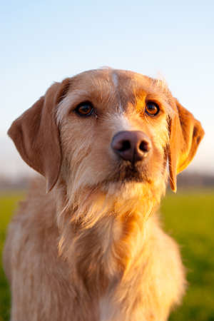 winterday: a portrait of a brown dog, outside in nature, on a sunny winterday Stock Photo