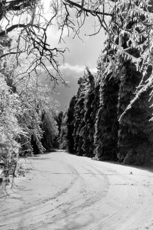 Michigan Ice Storm Stock Photo - 8796439